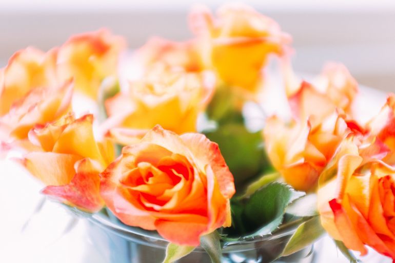 Roses overexposed