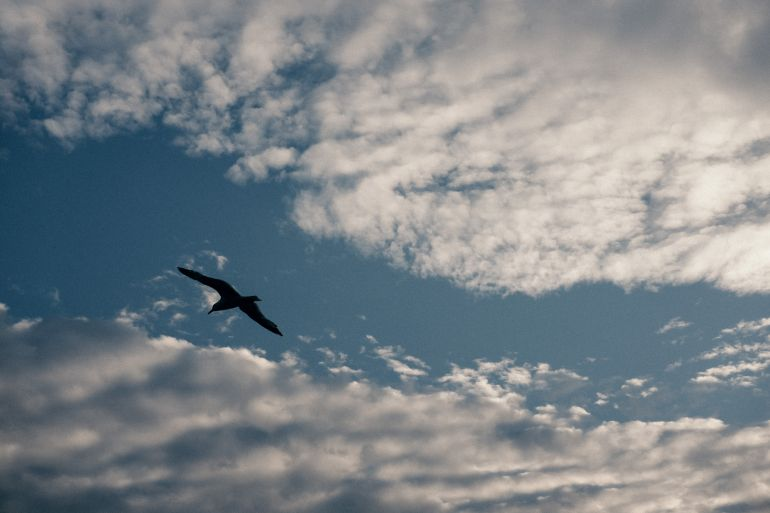 Seagull and clouds