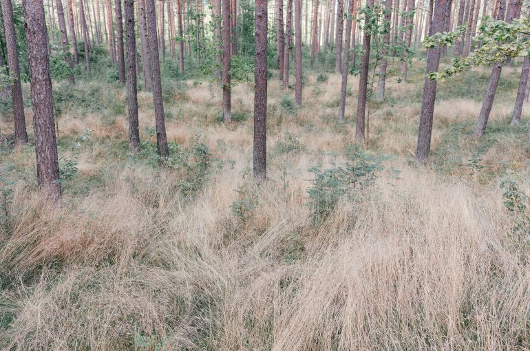 Summer forest in Latvia