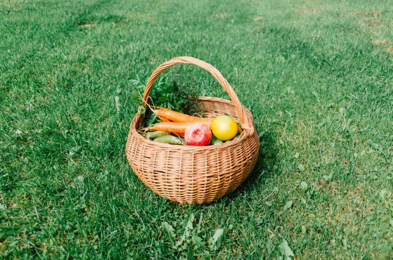 Homegrown vegetables and fruits in a basket