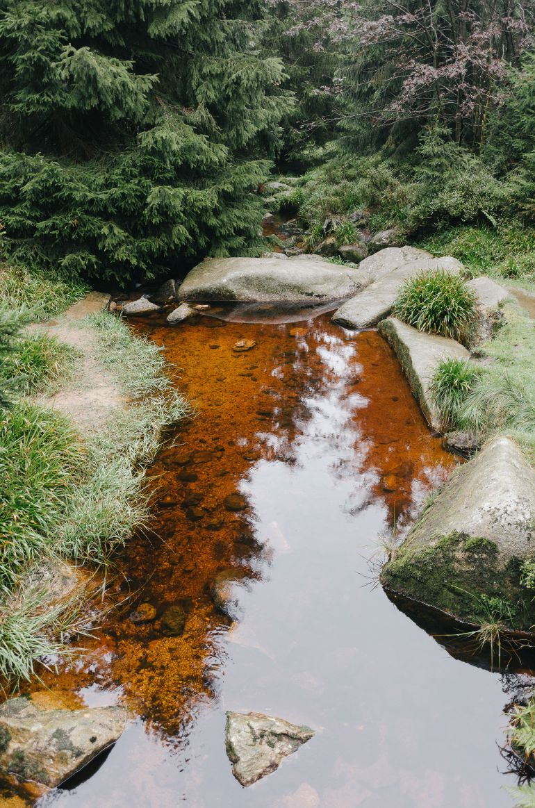 Brook on forest