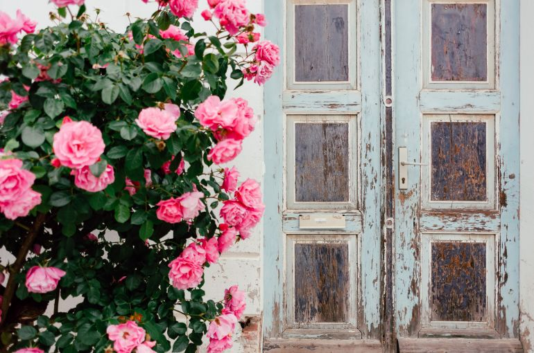Roses and old door