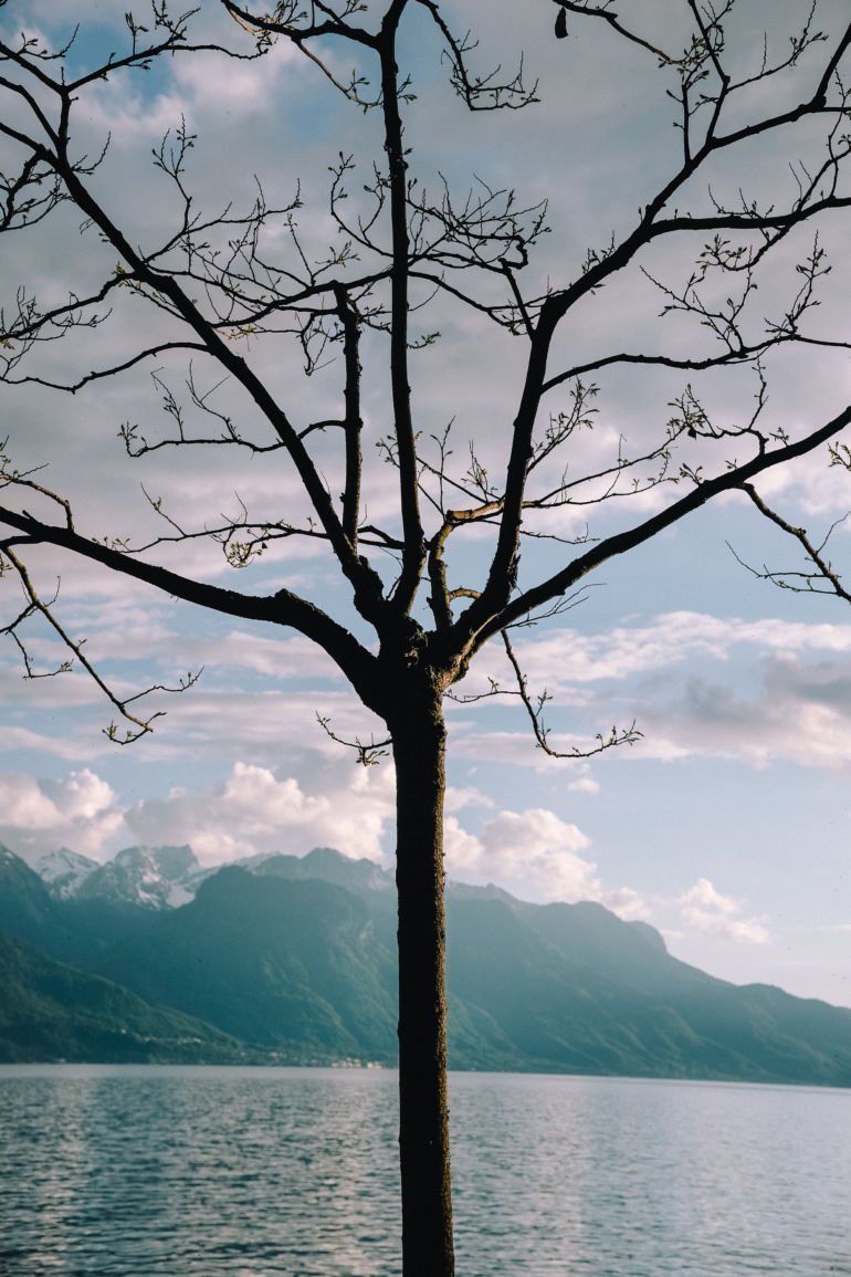 A tree against the lake of Geneva