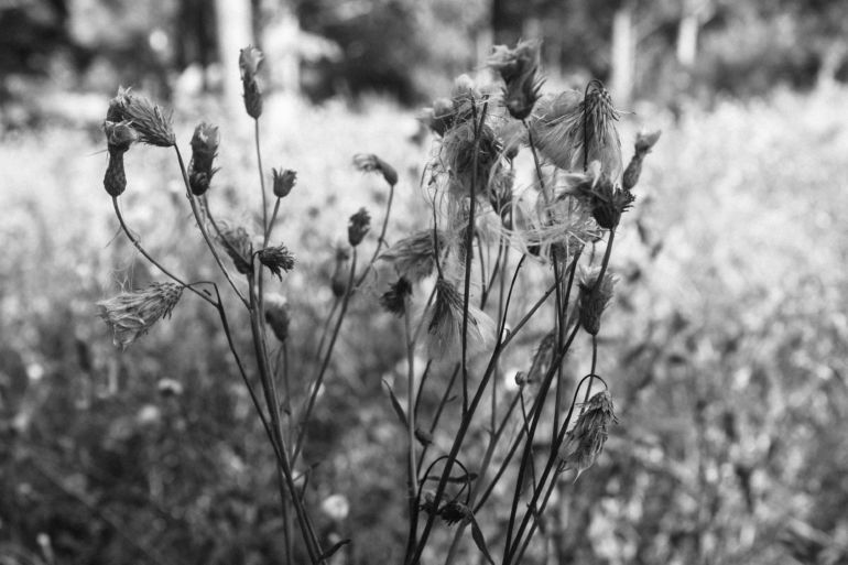 Dry flowers in the forest