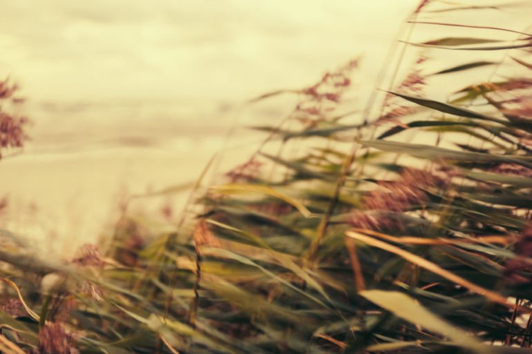 wind in grass on the beach