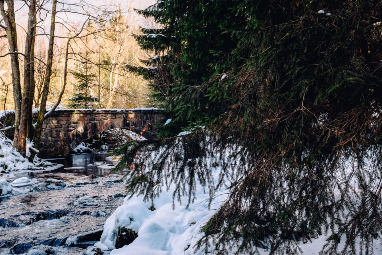 A bridge in the winter forest