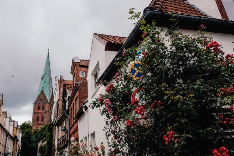Roses on the streets of Lubeck, Germany