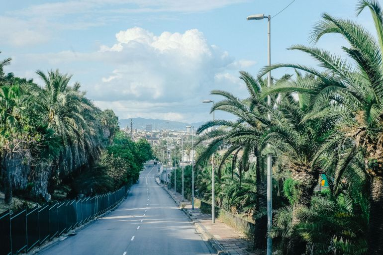 Road and palms in Barcelona