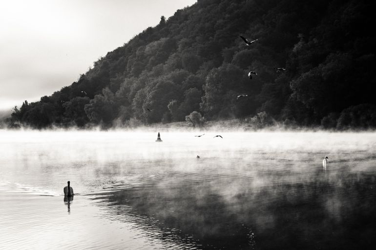 Birds on the Moselle river in black and white