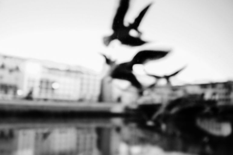 Abstract birds (Florence, Italy)