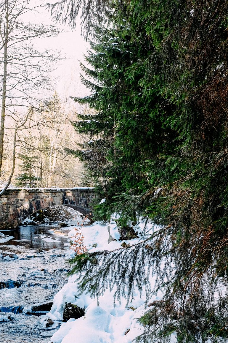 Bridge over the river in winter forest