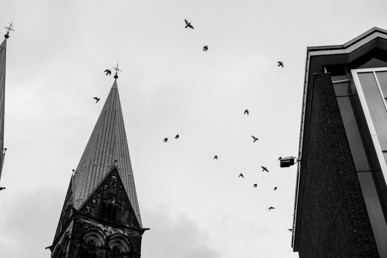 Birds and church spire in black and white
