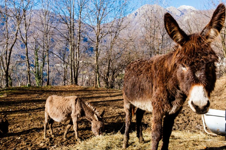 Donkeys on mountain pasture